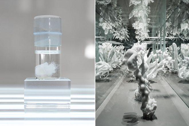 De gauche à droite : «Dead Immortal Jellyfish» (détail), Dominique Koch (2016) et «Tropisme», Julian Charrière (2014)