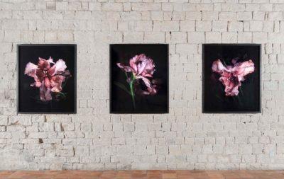 Mat Collishaw – Vue d'exposition
