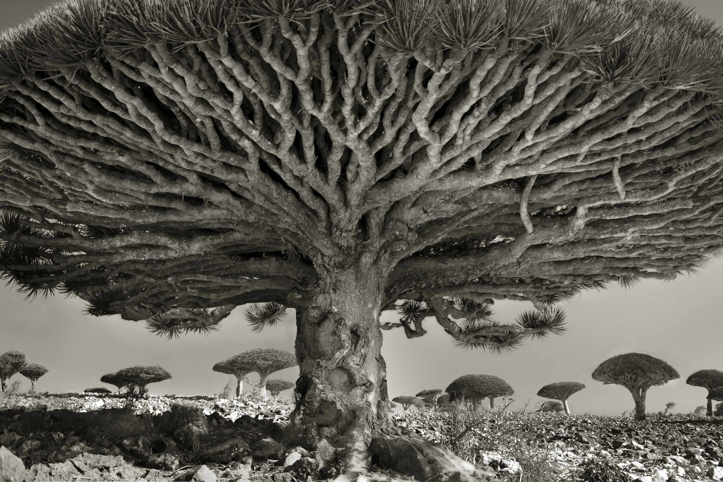 Island of the Dragon's Blood, Heart of the Dragon (PH Neutro gallery)