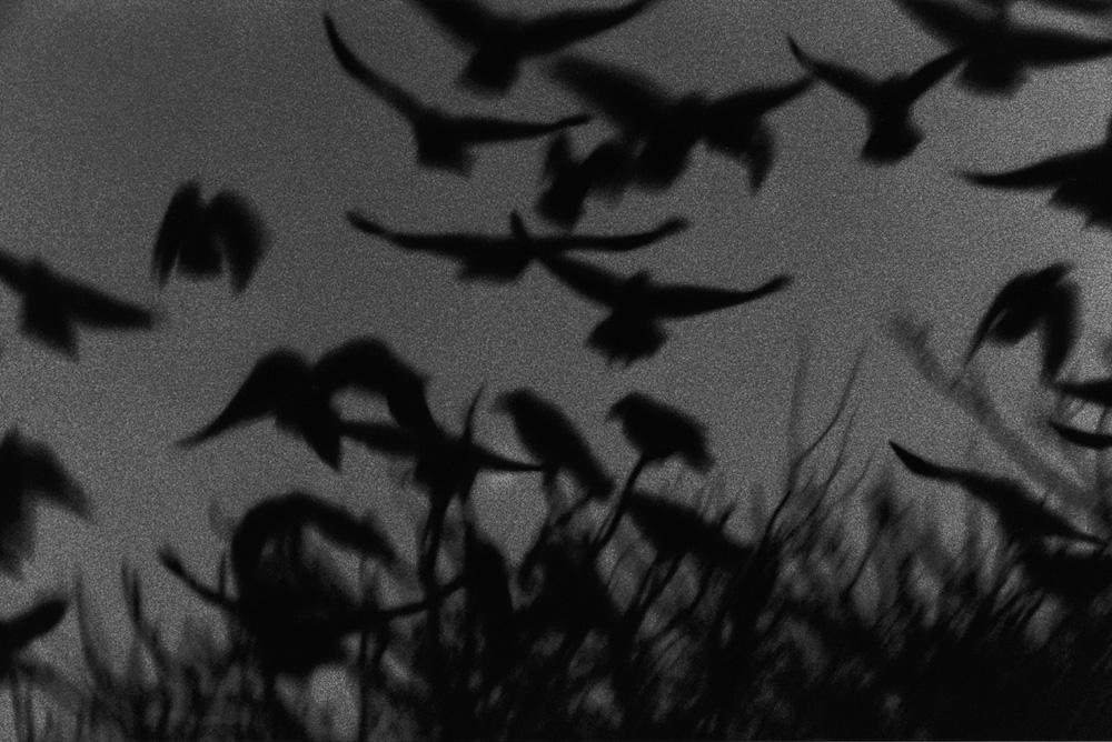 Kanazawa, série Solitude of Raven