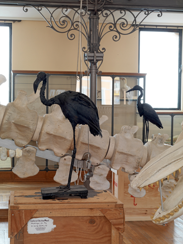 Flamingo & The Tar Museum – Heron,