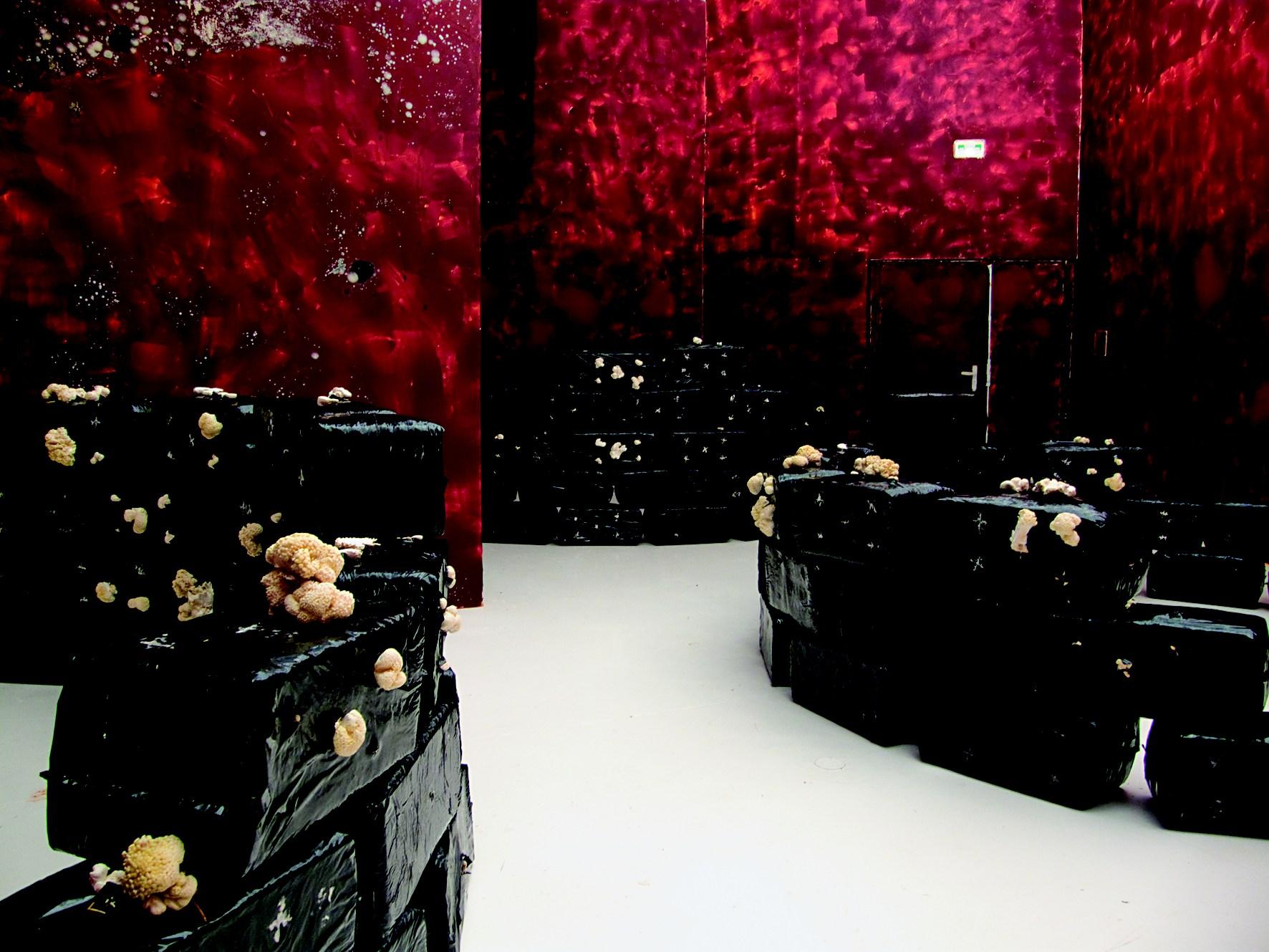 Murs de double concentré de tomates@sans sel et briques de culture@de pleurotes