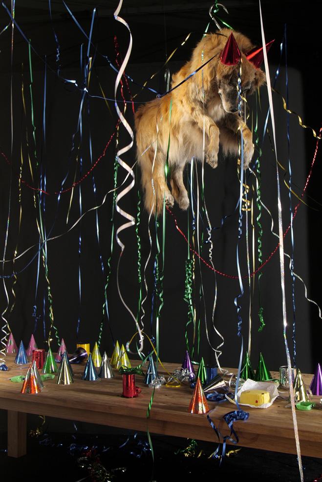 Le carnaval des chiens errants morts