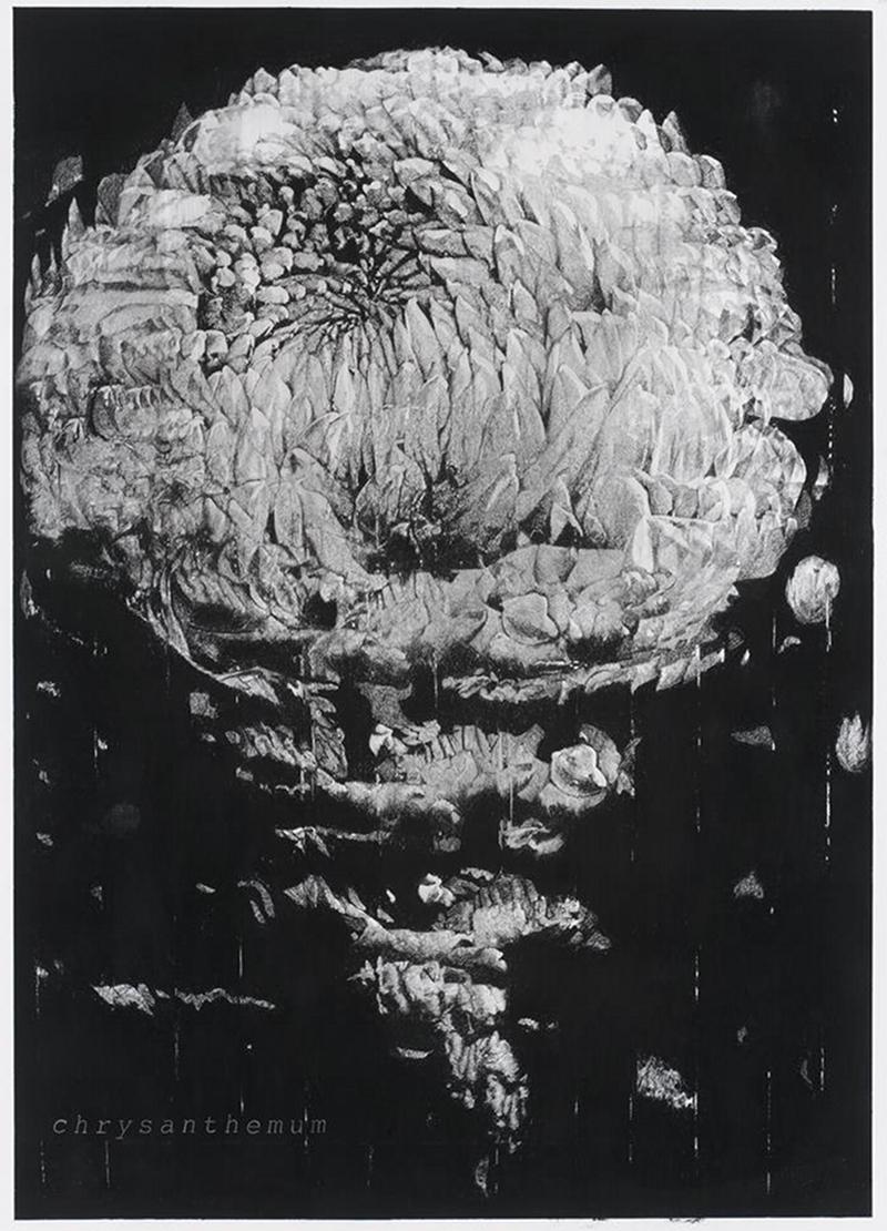 Chrysanthemum, fusain sur papier