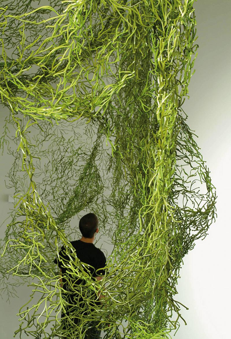 Les Algues