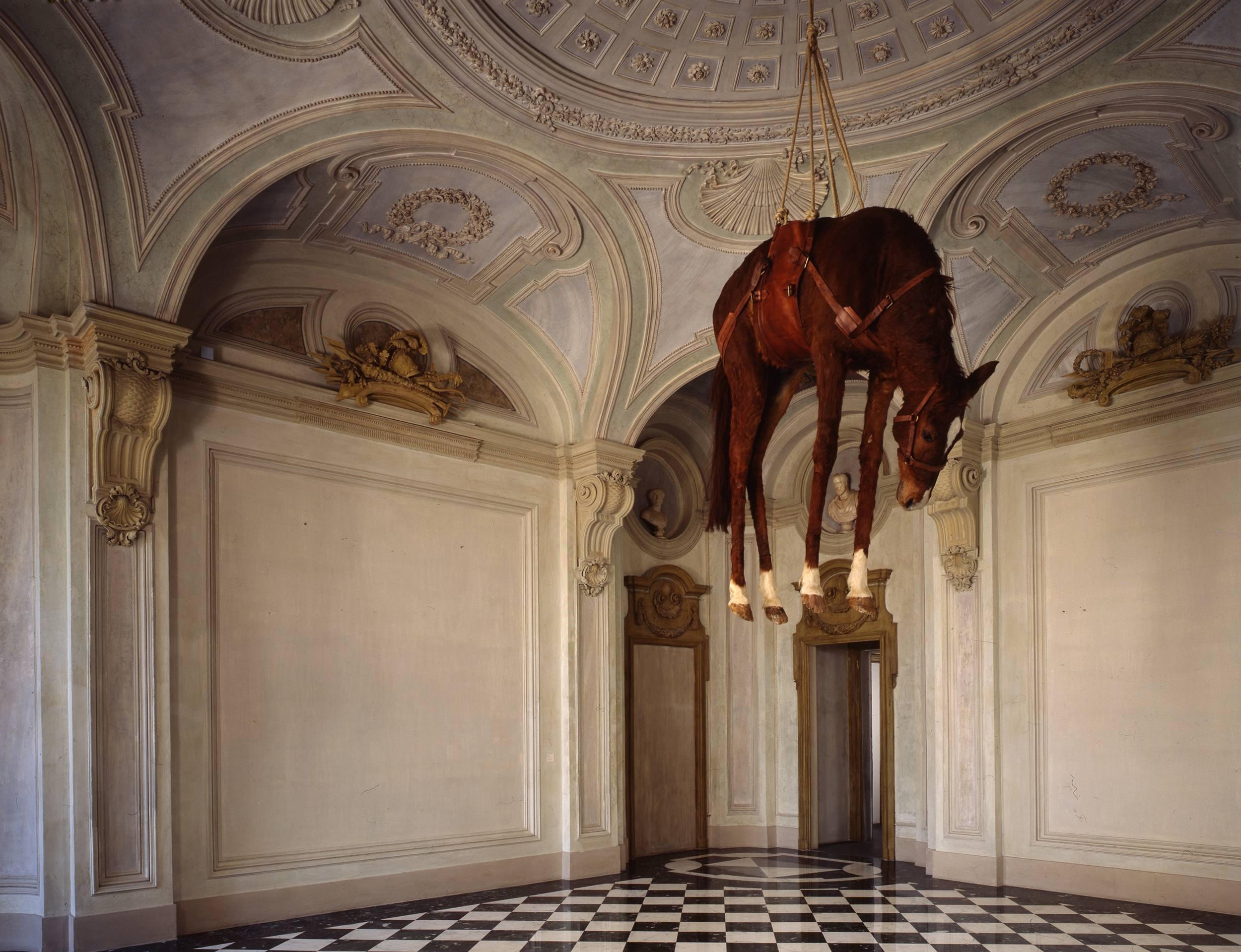 Novecento, cheval empaillé, selle en cuir, corde, poulie