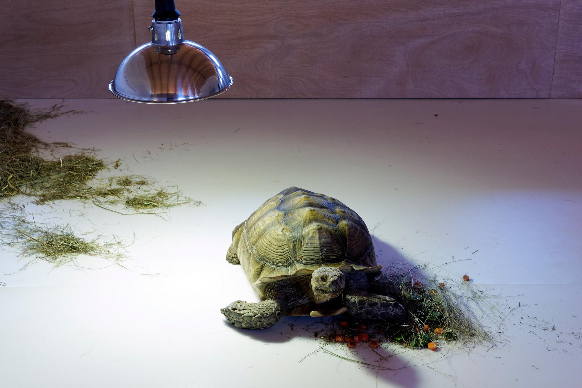 Mon professeur la tortue, production du Centre international d'art@et du paysage de l'île de Vassivière
