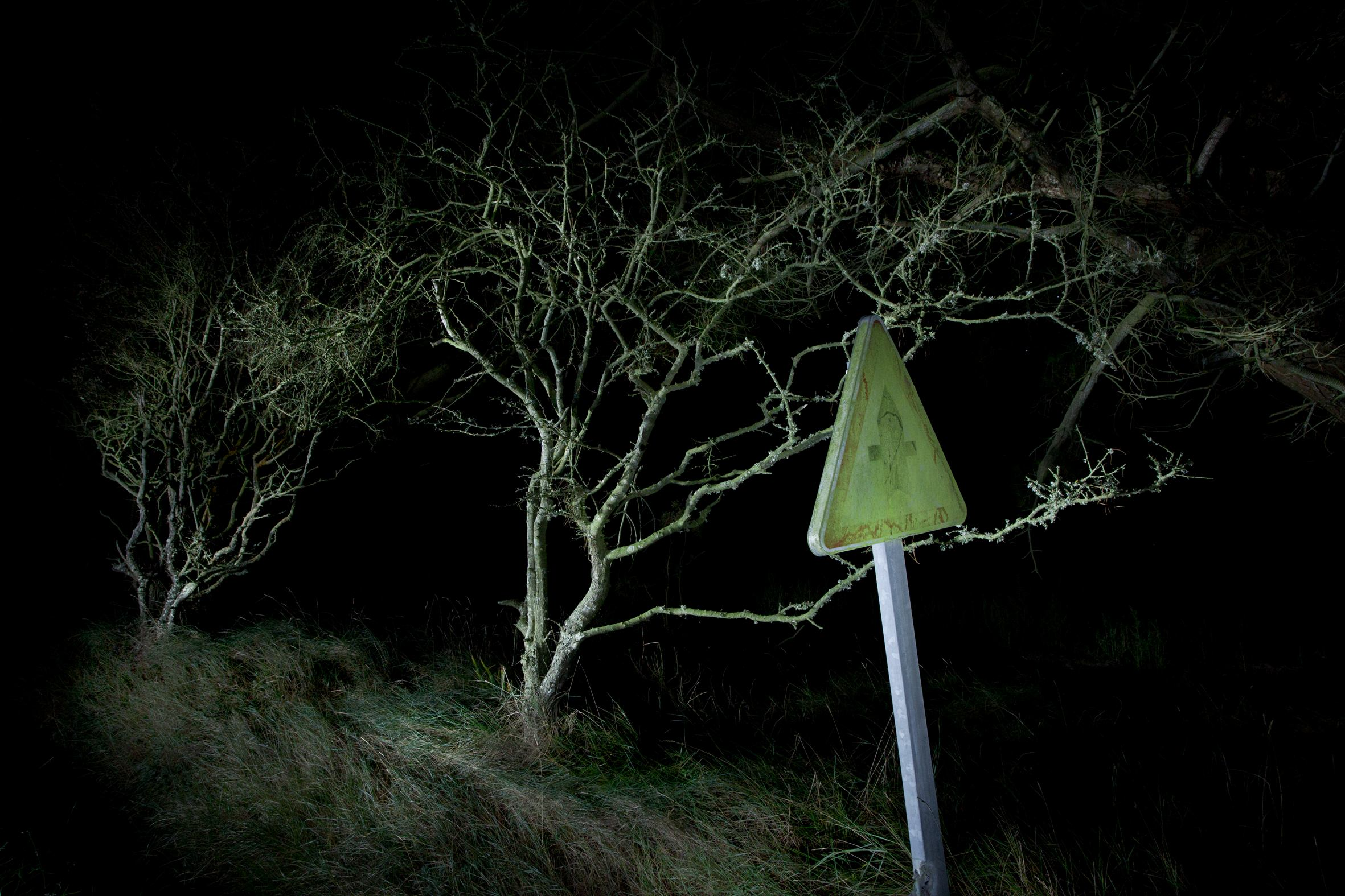 Extrait de la série Nocturnes Végétales