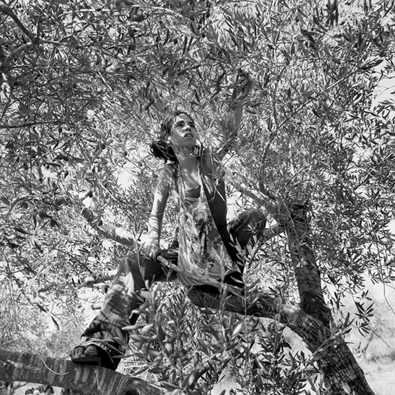 Série Israël Borderline. Une jeune@Israélienne aide des Palestiniens@à récolter des olives